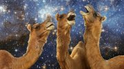 Space Humor Camel Picture Wallpapers Animal